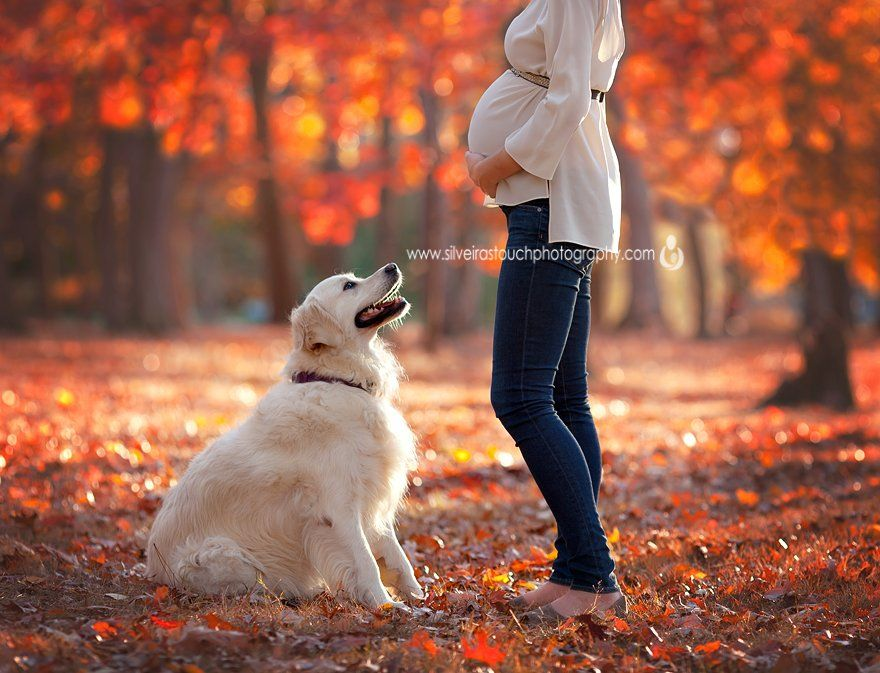 pregnancy photo with dog in park