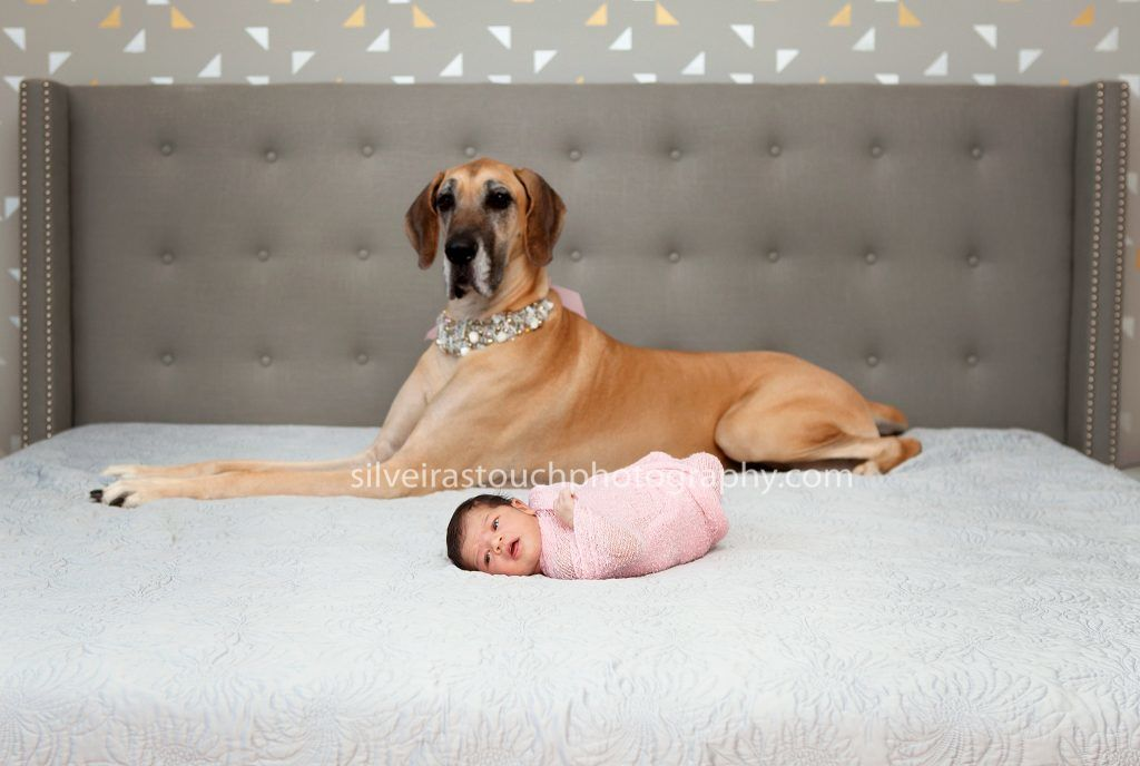 newborn pets photos