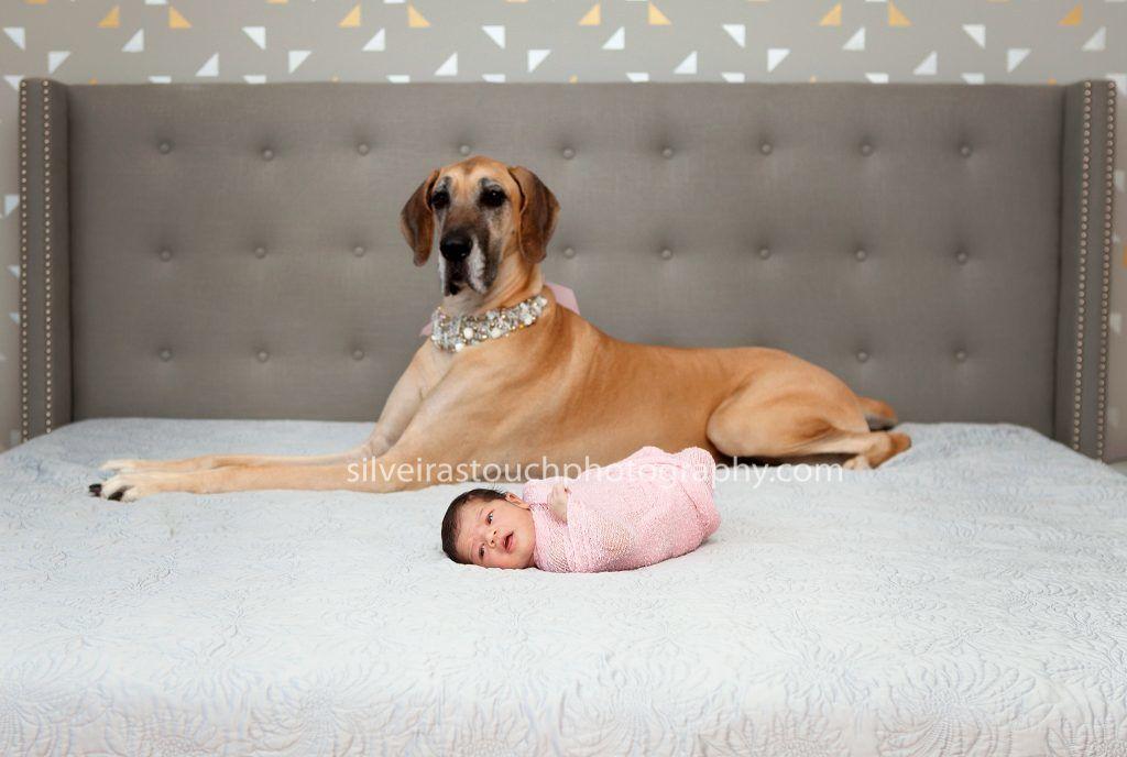 newborn pets photos