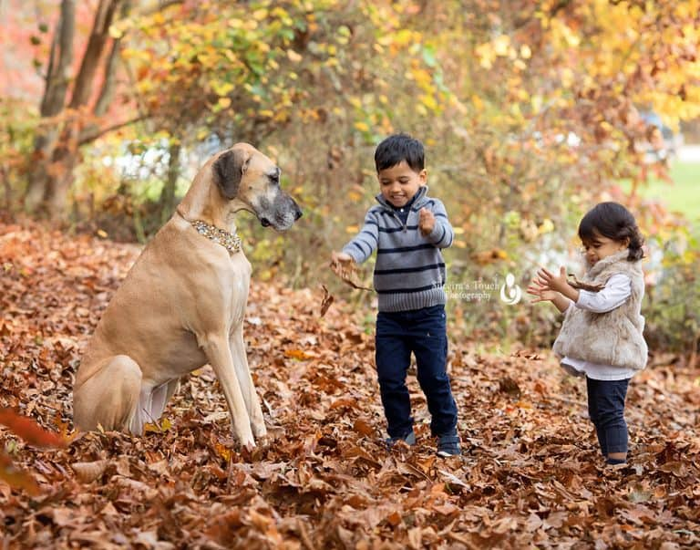 photo of sibling and puppy outdoor playing with leaves