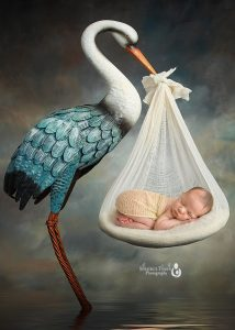 newborn photography of baby boy carried by stork